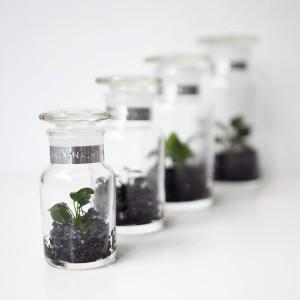 bottle botanist ボタニスト 水草 瓶